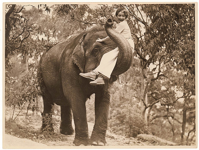 American film Star Helen Twelvetrees on an elephant in Taronga Park Zoo, Sydney, Australia, circa 1936. By Sam Hood.